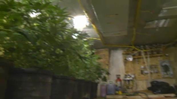 [MI] RAW VIDEO: Underground Grow House in Miami-Dade