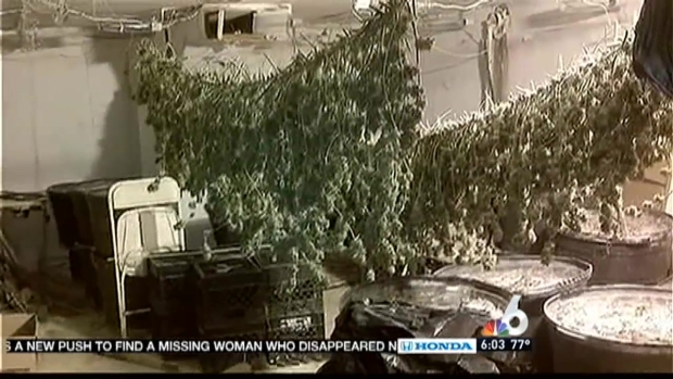[MI] Hialeah Grow House Bust is 3rd in 24 Hours