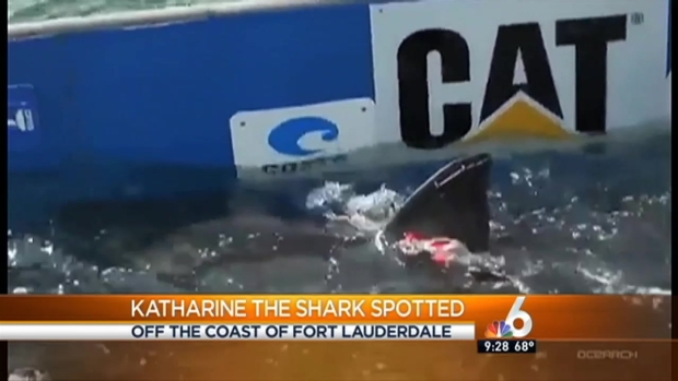[MI] Great White Shark Spotted Near Fort Lauderdale