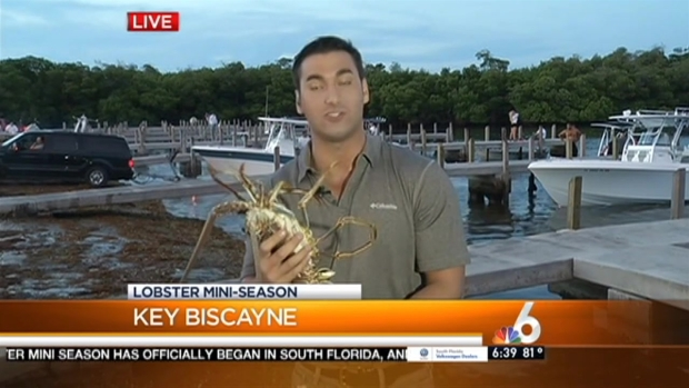 Lobster Mini-Season Kicks Off in South Florida