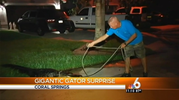 [MI] 9-Foot Gator Found at Coral Springs Home
