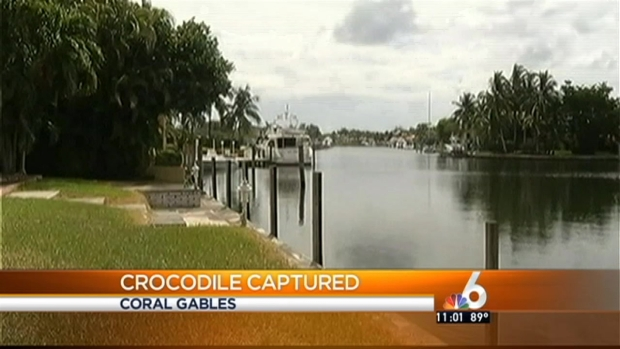 [MI] 12-Foot Crocodile Dies After Capture in Coral Gables