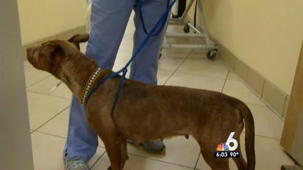 [MI] Dog Found With Muzzle Tied Shut in Plantation