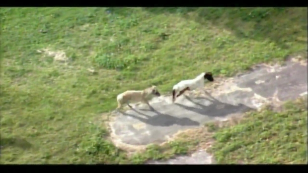 [MI] Raw Video: Ponies on the Run in NW Miami-Dade