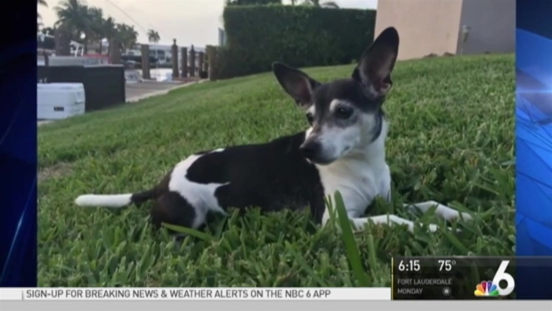 [MI] Pet Detective Helping in Search for Dog Stolen During Fort Lauderdale Carjacking