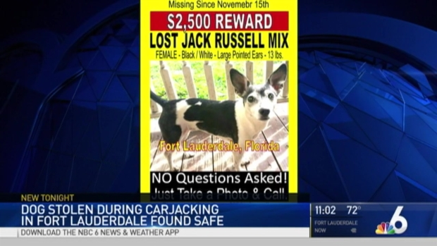 [MI] Dog Stolen During Carjacking in Fort Lauderdale Found Safe