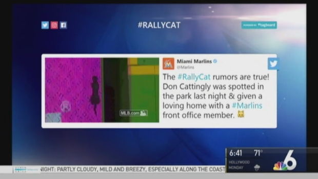 [MI] Marlins #RallyCat Finds Home After Taking Over Internet