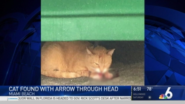 [MI] Cat Found With Arrow Through Head on Miami Beach