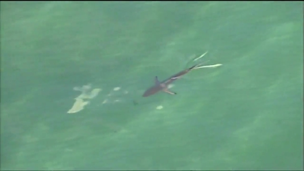 [MI] Sharks Seen Swimming Off Broward County Coast
