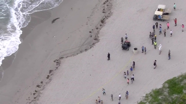 Crocodile on Florida beach moved to 'suitable habitat'