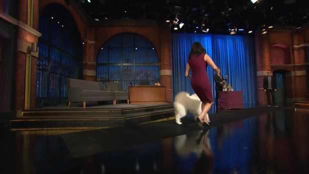 [NATL] 'Late Night': Showing a Westminster Dog Show Contestant