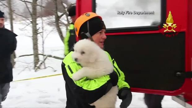 [NATL-DFW] Puppies Rescued From Italy Avalanche