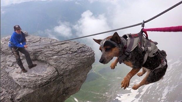 "Dogs Can Fly: ""Whisper"" The Dog in Photos"