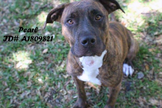 Last Chance Dogs at Broward Animal Care May 6, 2016