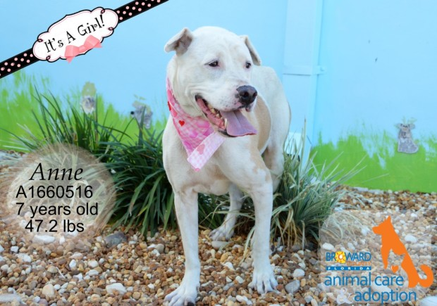 Broward County Animal Care's Urgent Dogs - June 18