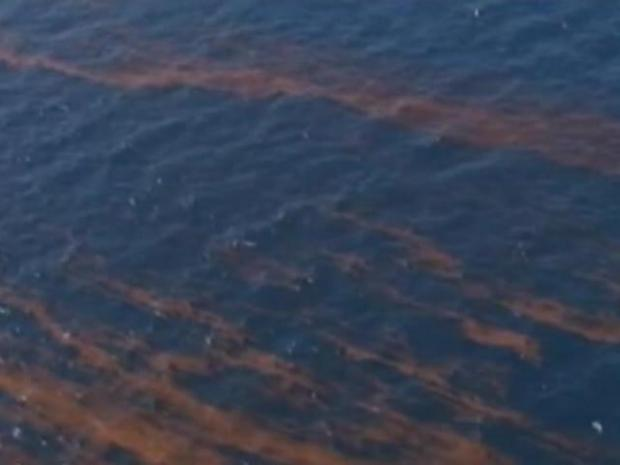 [MI] Gulf Oil Spill's Effect on South Florida
