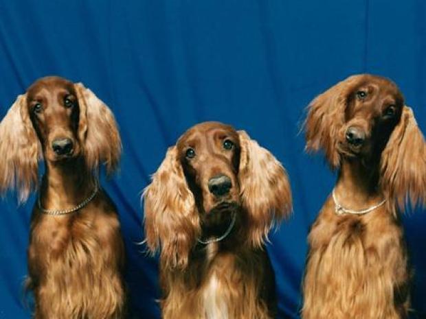 [MI] Notorious Puppy Mill Pet Store Bankrupt