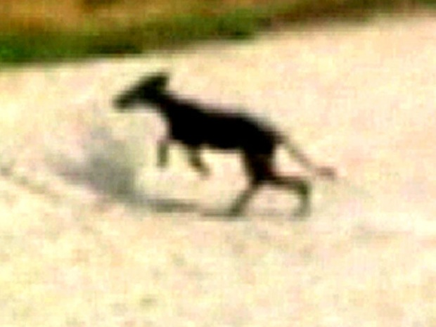 [NATL] Mysterious Creature Prowls Oklahoma