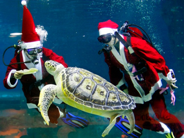 [MI] Scuba Santa Brings Wet Christmas to the Seaquarium