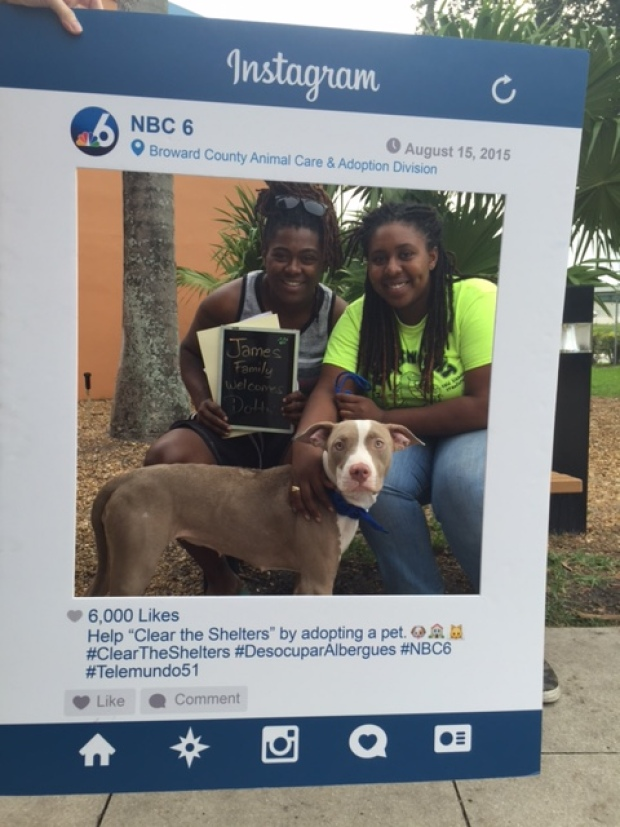 #ClearTheShelters Adopted Animals Broward County Animal Care & Adoption