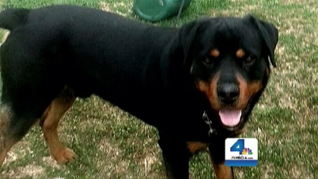 [LA] Hawthorne Police Shoot, Kill Dog After Handcuffing Owner