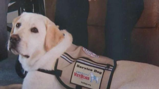 Guide Dog for President George H.W. Bush Is Returning to NY