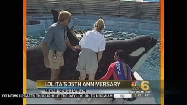 [MI] Seaquarium's Lolita Celebrates 35th Anniversary
