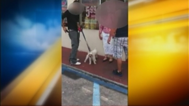"[MI] Owner of Stolen Dogs ""Very Glad"" He Saw Them in South Beach Cell Phone Video"