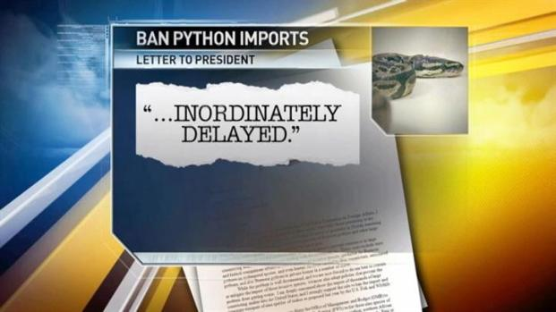 [MI] Python Politics: Coalition Criticizes President for Inaction on Long-Sought Ban on Python Imports