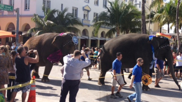 """Greatest Show on Earth"" Takes Over South Beach"