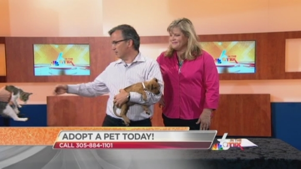 [MI] Adopt a Pet Today at the the Miami Dade Animal Services