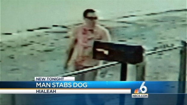 [MI] Police Searching for Man Who Stabbed Dog in Hialeah