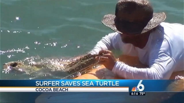 [MI] Florida Surfer Saves Sea Turtle