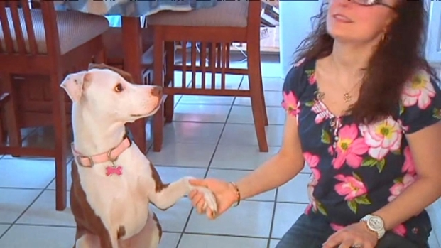 [MI] During Pit Bull Awareness Month, Advocates Spread Positive News About Breed