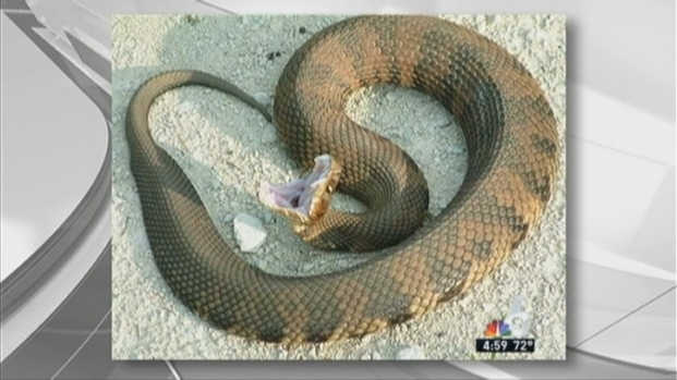[MI] Water Moccasin Bit 16-Year-Old in Miramar: Authorities