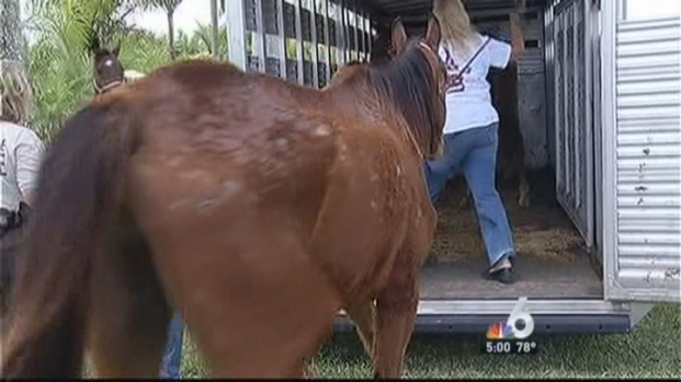 [MI] 11 Starving Horses Found in Southwest Miami-Dade: SPCA