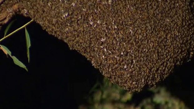 [DFW] Massive Beehive Makes Reporter Nervous