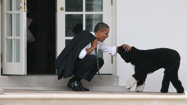 Bo Obama Marks Three Years in White House