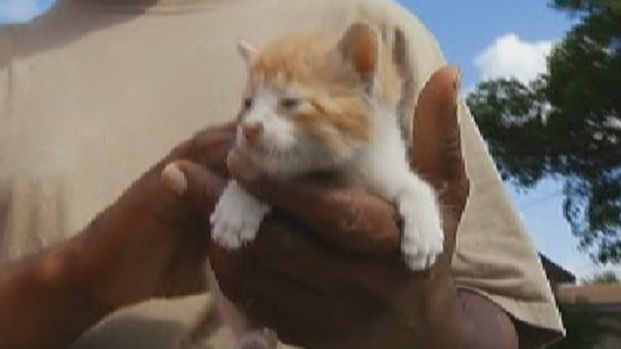 [NATL] Kitten Saved From Wall After Being Stuck for Days