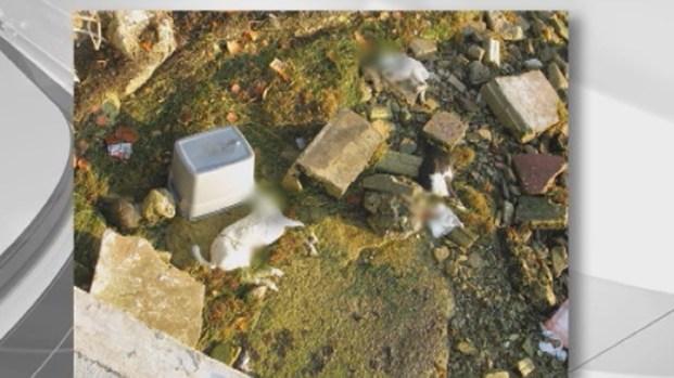 [NATL-V-MI] Five Headless Goats Found Near Miami Shores