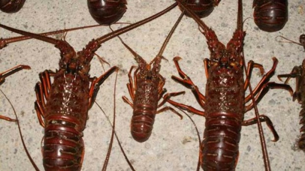 [MI] Authorities Push Safety During Lobster Mini Season