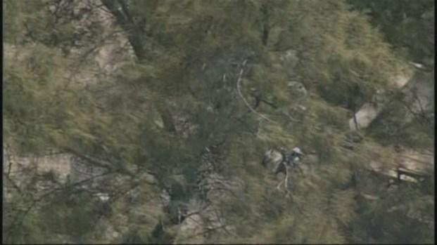 [MI] Aerial Footage of Pelican Stuck in Tree