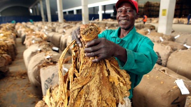 [AP] Tobacco as the Next Biofuel