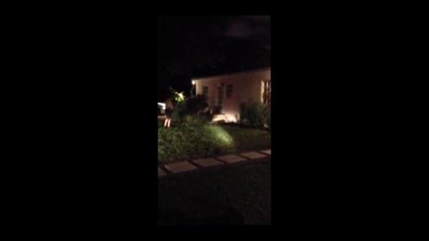 [MI] RAW VIDEO: Gator Strolls Through Miami-Dade Neighborhood