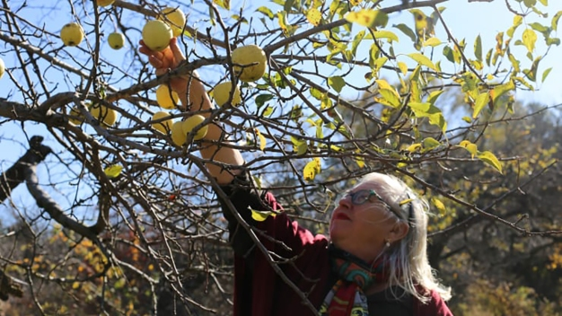 Apple Farmers Endure Crop, Profit Losses as Climate Changes