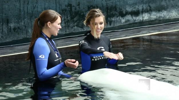 Sea Exploration at The Georgia Aquarium