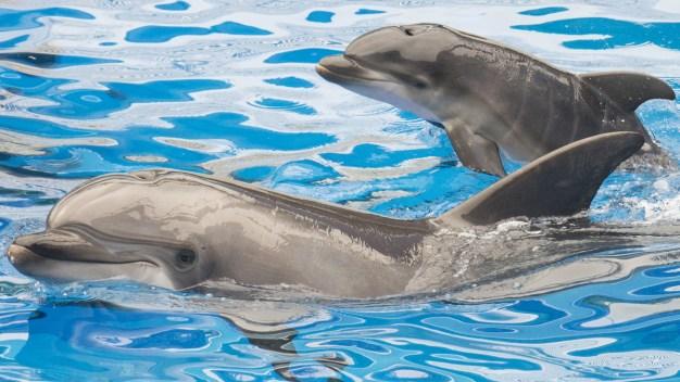 SeaWorld Orlando Offers BOGO Deals For Blue Friday Promotion