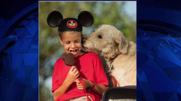 Dogs Now Welcomed at Four Disney World Resorts