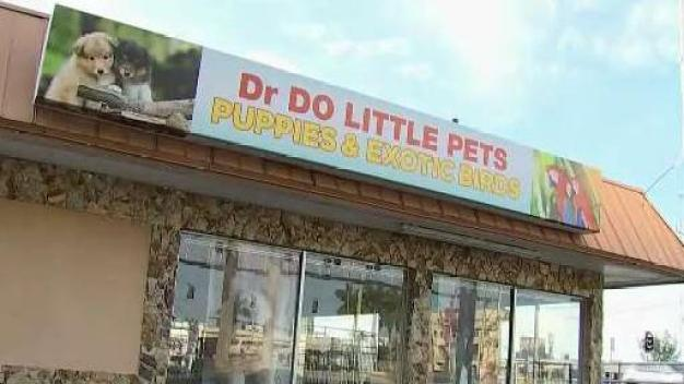 Dozens of Puppies Rescued from Pet Store