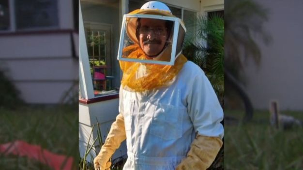 Grandfather Stung 150 Times While Trying to Dislodge Bee Hive